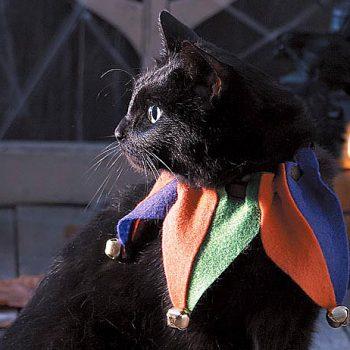 Cat Jester Collar