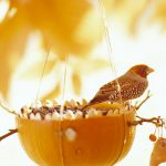 Pumpkin Bird Feeder