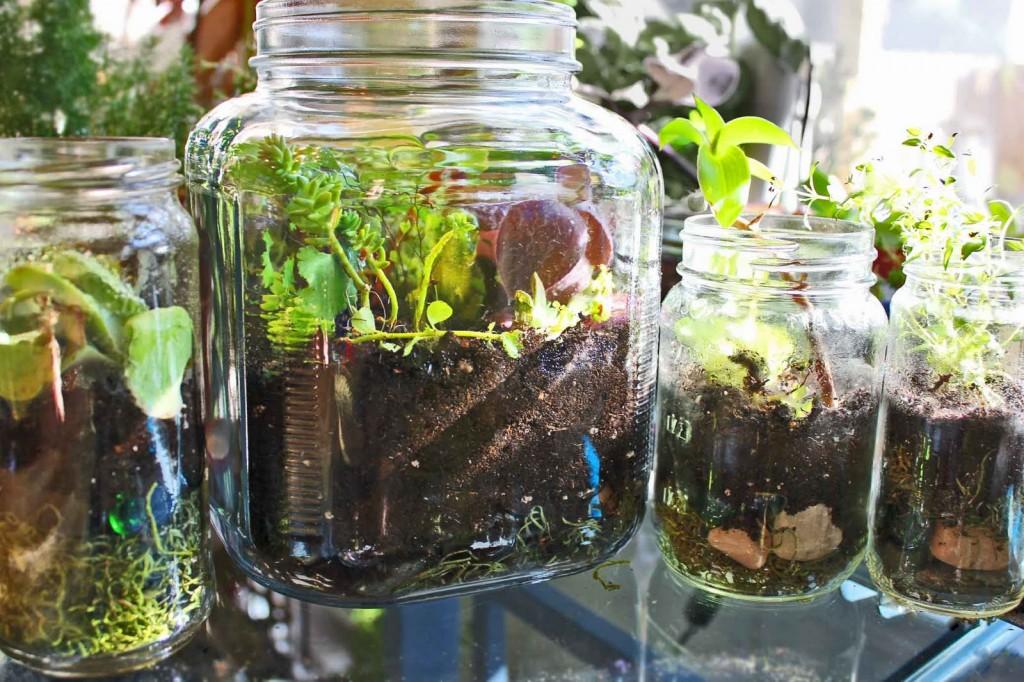 Terrarium Jar Fun Family Crafts