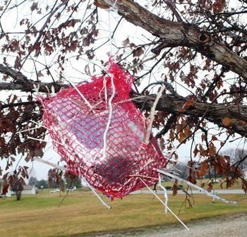 Bird Nest Kits