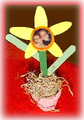 Potted Daffodil Picture