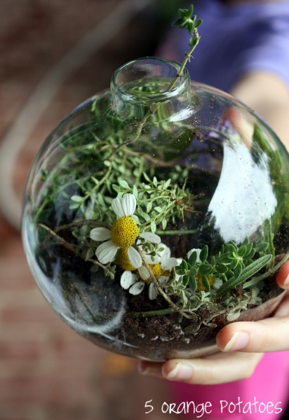 Shakespeare Terrarium