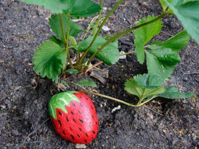 strawberry_rocks