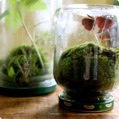 Recycled Jar Terrariums