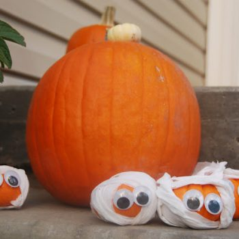 Miniature Mummy Pumpkins