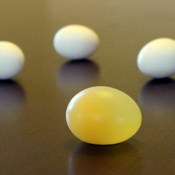 Naked Egg Experiment