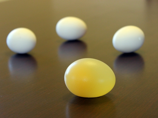 Naked Egg Experiment