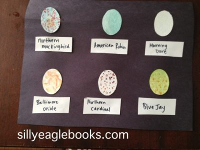 Backyard Bird Egg Display