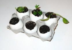 Eggshell Planters
