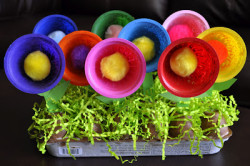 Fruit Cup Flowers