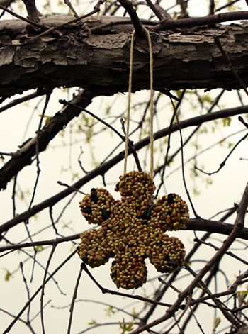 Spring Cookie Cutter Bird Feeders