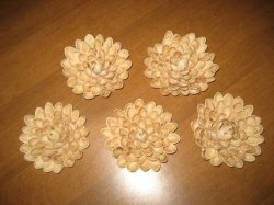 Pistachio Shell Flower Fun Family Crafts