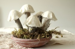 Felt & Birch Branch Mushrooms