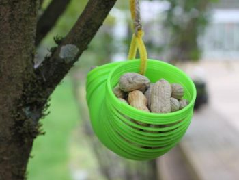 Slinky Squirrel Feeder