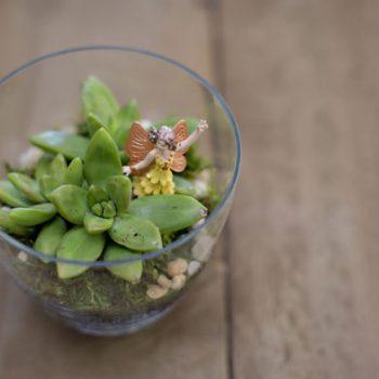 Make a Mini Terrarium