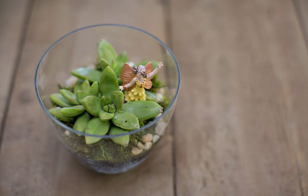 Make a Mini Terrarium