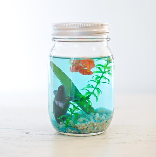 Make a Mason Jar Aquarium