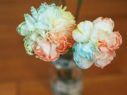 Rainbow Carnations