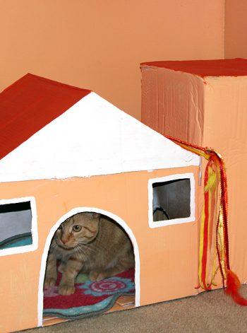Cardboard Box Cat House