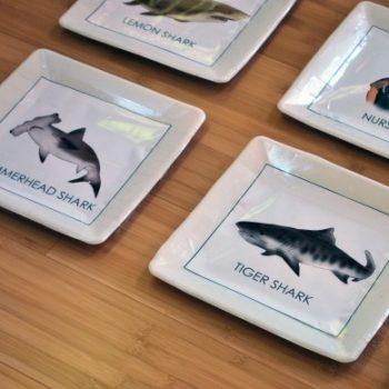 Shark Memory Game
