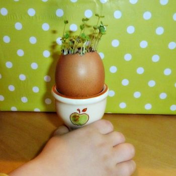 Eggshell Mini Garden