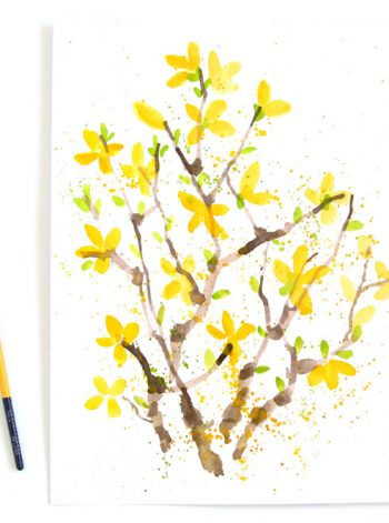Watercolor Forsythias