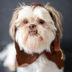 No Sew Ewok Star Wars Dog Costume