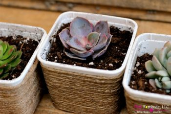 THIS DIY SUCCULENT PROJECT HONORS HEALTH, MOM, AND MOTHER EARTH