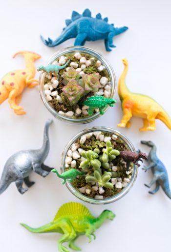 Dinosaur Terrariums