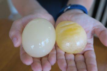naked_egg-003