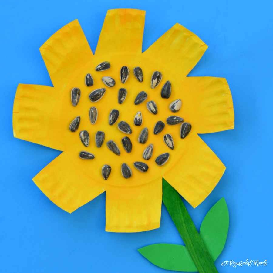 This paper plate sunflower craft is a great fall craft that offers kids an opportunity to work on scissor skills and build their fine motor skills as they cut the petals for the sunflower.