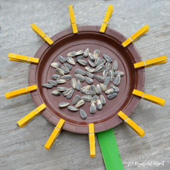 This paper plate sunflower is a great craft for kids to make in late summer and early fall. Kids will build and stregthen their fine motor skills as they open and close the sunflower petal clothespins.