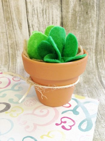 This cute succulent doesn't need any care and will always look great!