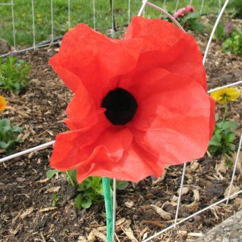 Coffee Filter Poppy
