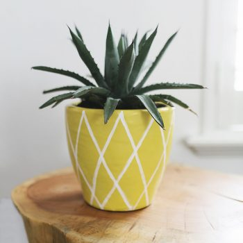 Pineapple Plant Pot