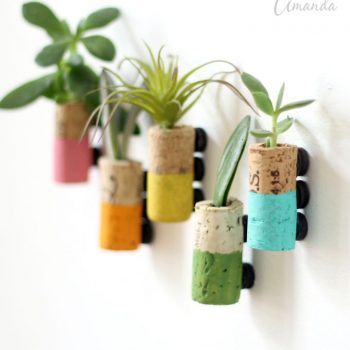 Cork Succulent Magnets