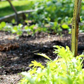 Twig Garden Markers