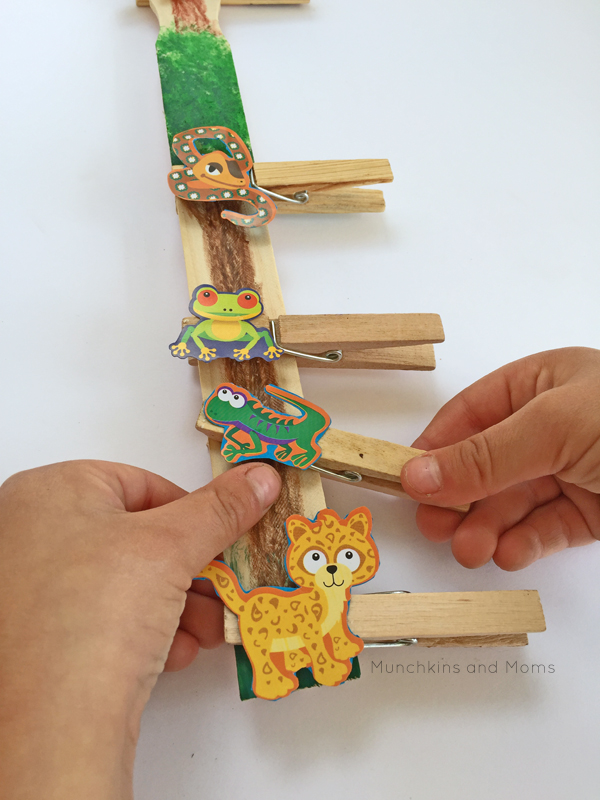 Layers Of The Rainforest Craft Fun Family Crafts