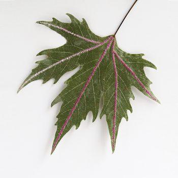 Sewn Leaf