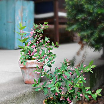 Aged Terracotta Pots