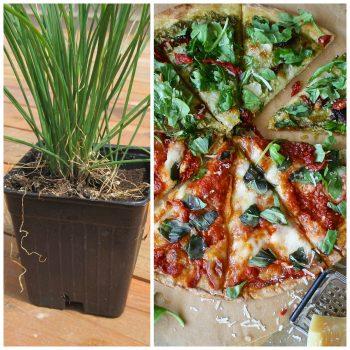 Pizza Herb Garden